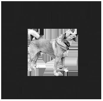 Klub für österreichische Pinscher